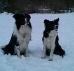 Dusty und Ruby